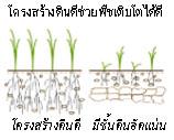 เกษตรอินทรีย์พลังชีวภาพ_หลักสำคัญ 3 ประการ 002