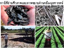 เกษตรอินทรีย์พลังชีวภาพ_หลักสำคัญ 3 ประการ 008