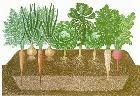 เกษตรอินทรีย์พลังชีวภาพ_หลักสำคัญ 3 ประการ 010