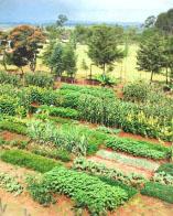 เกษตรอินทรีย์พลังชีวภาพ_หลักสำคัญ 3 ประการ 018